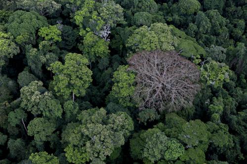 Det var en gång en skog. TriArt 2014