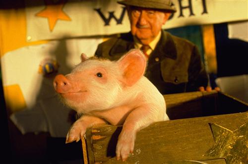 Babe Den modiga lilla grisen. 1996 UIP
