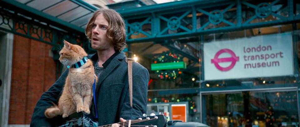 A street cat namned Bob